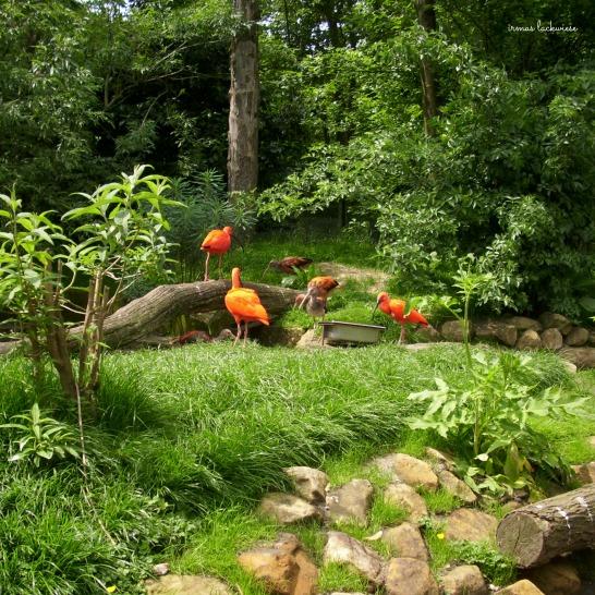gaia-zoo-11