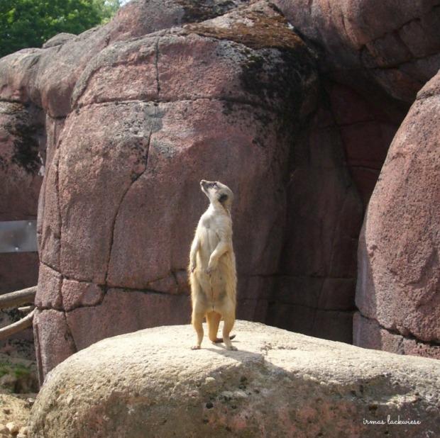 gaia-zoo-12