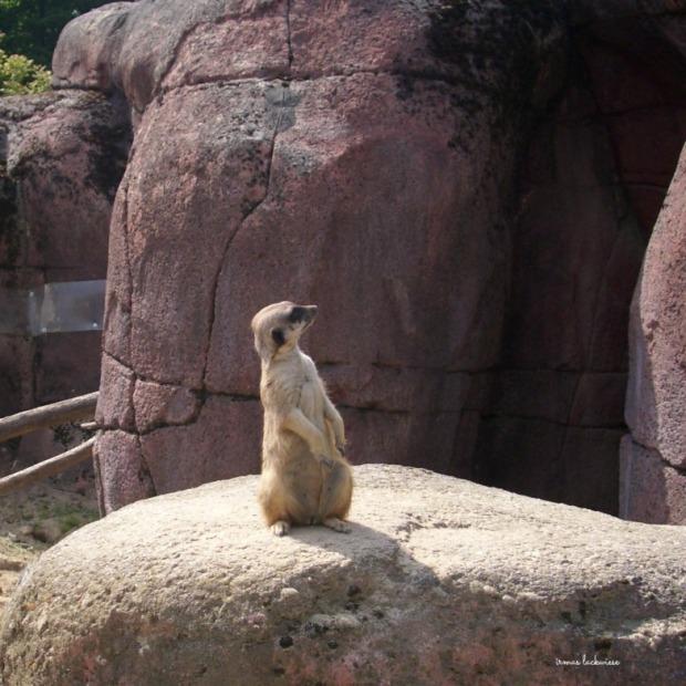 gaia-zoo-14