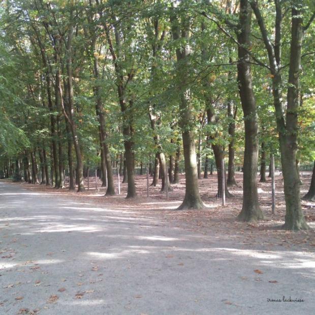 wildpark-gangelt-132