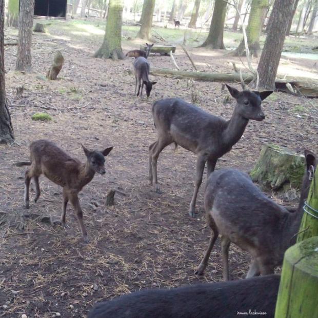 wildpark-gangelt-158