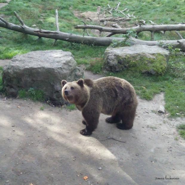 wildpark-gangelt-208