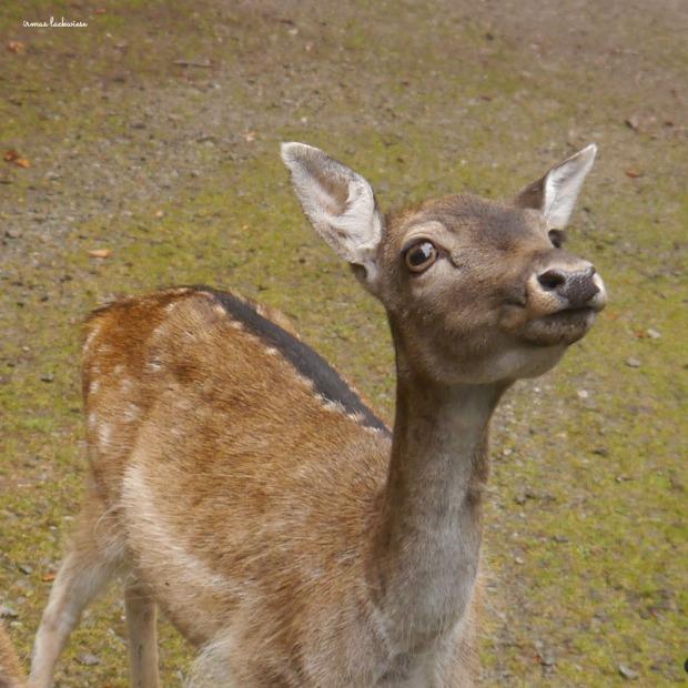 wildpark-hellental-8